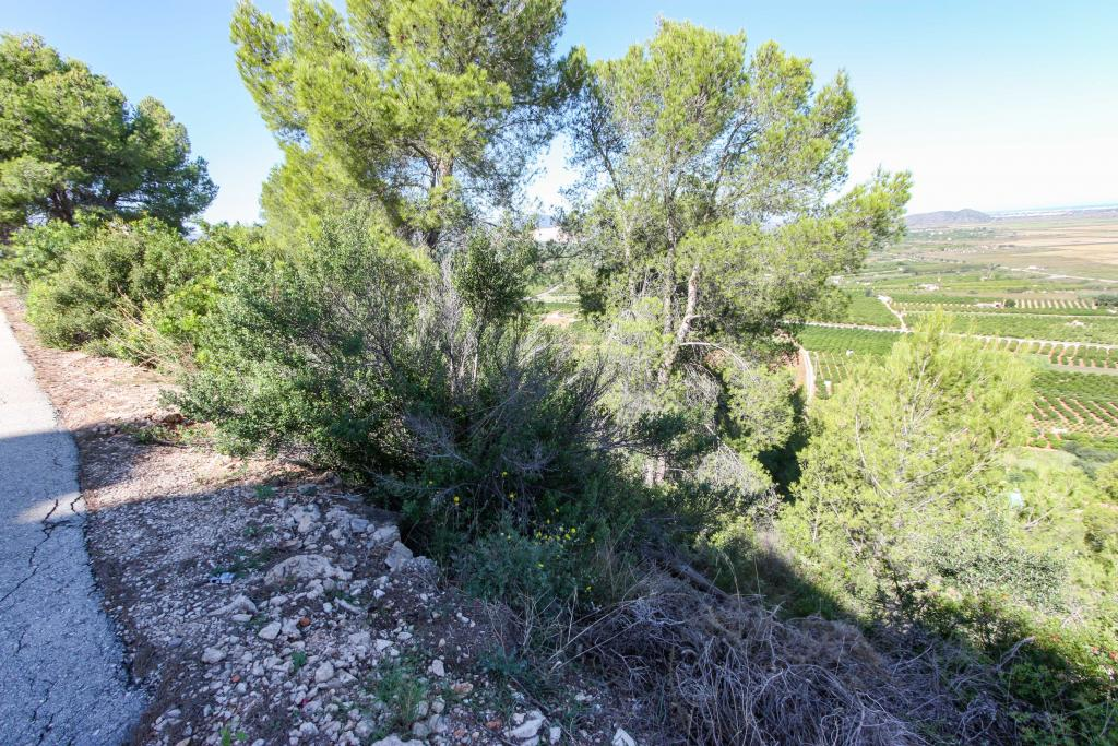 Photo number 2. Land / Ground for sale  in Pego. Ref.: PRT-228915