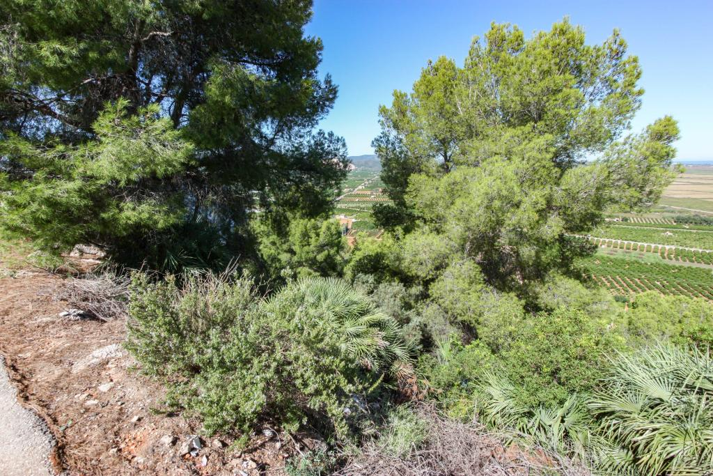 Photo number 4. Land / Ground for sale  in Pego. Ref.: PRT-228915